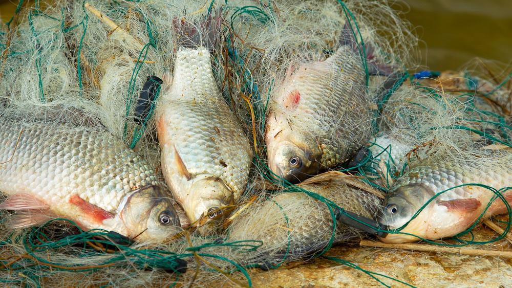 Fellendülhet a magyar halászat: rugalmasabb lesz a támogatási rendszer