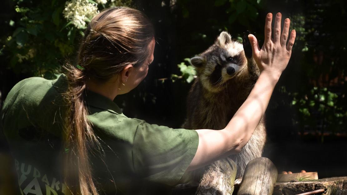 Irány a Budakeszi Vadaspark: különleges élmények várnak