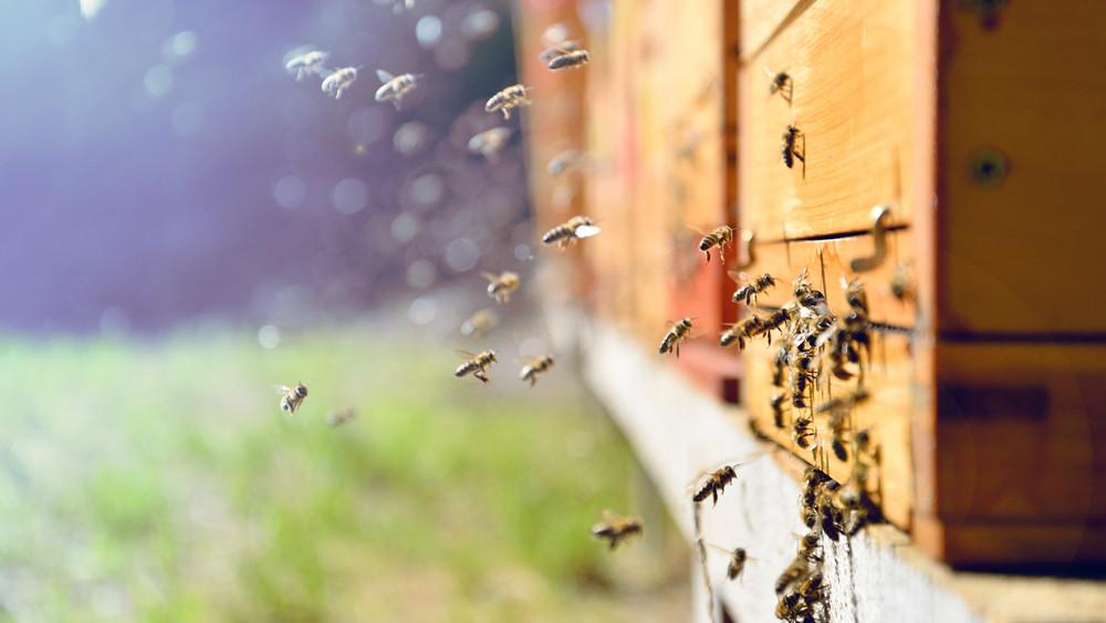 Jó hír a magyar méhészeknek: milliárdos támogatással segítik az ágazatot