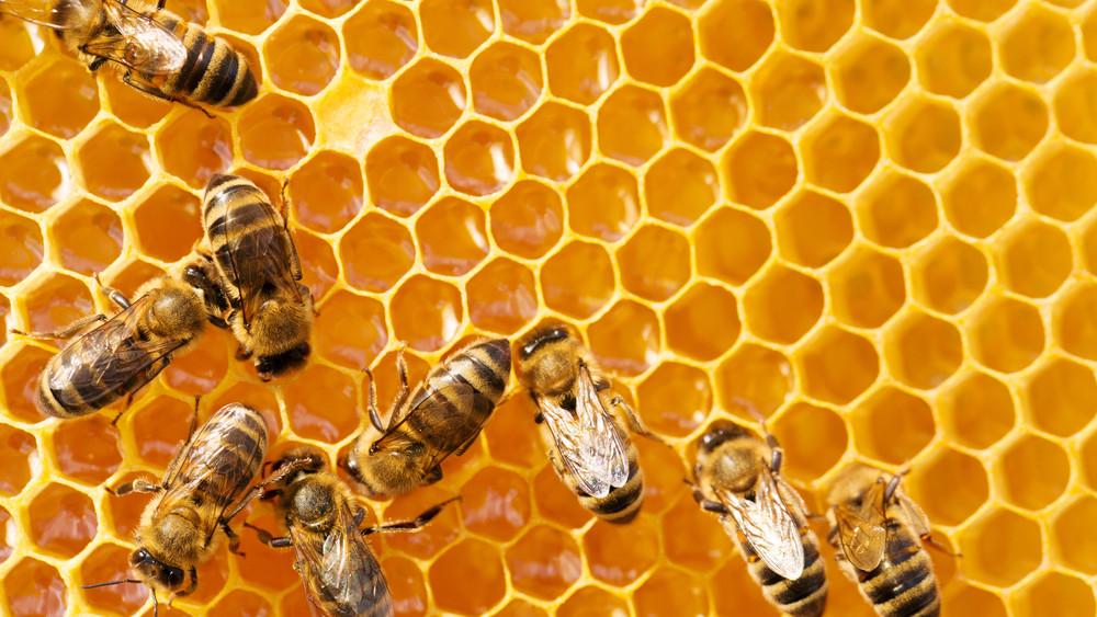 Mégsem maradunk méz nélkül: a hárs még megmentheti az évet