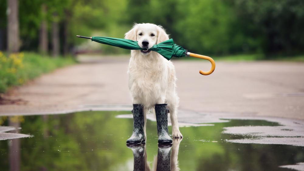 Még ne tegyük el az esernyőt: újabb zivatarokra számíthatunk