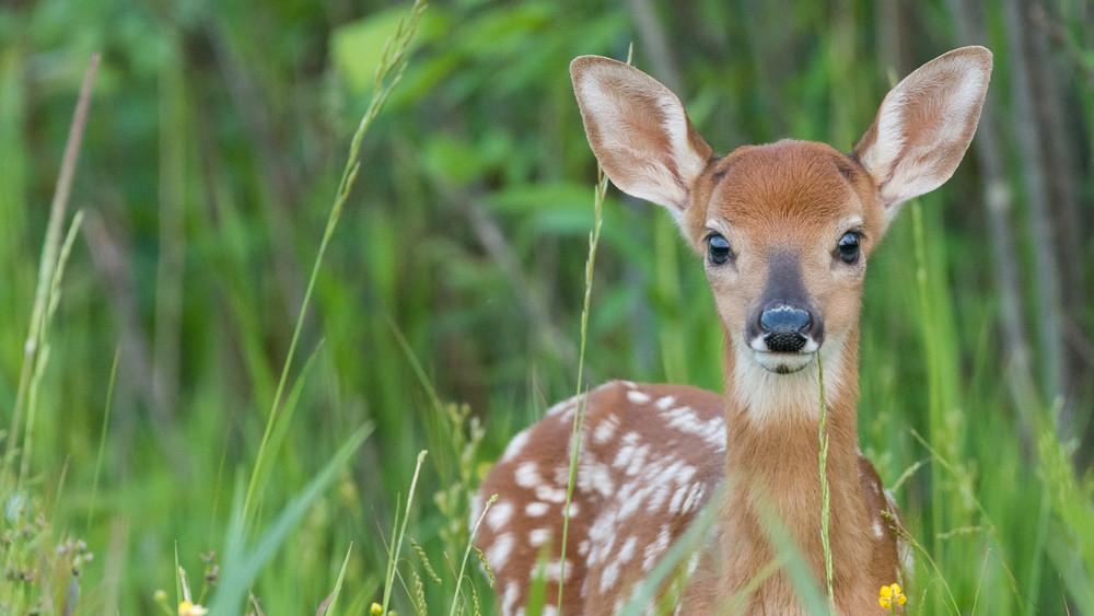 Még mindig tilos árva állatot hazavinni: erre figyelj az erdőben járva