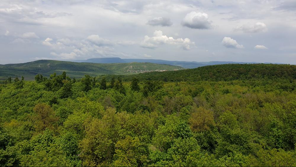 Még több erdő boríthatja hazánkat: így segítenék az erdősítést
