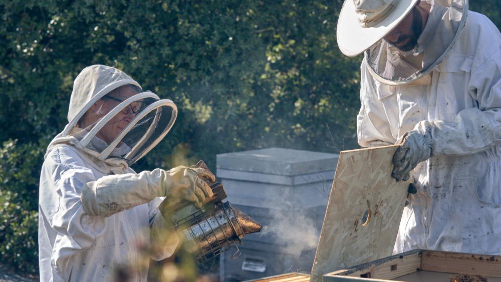 Rendkívüli támogatás segíti a méhészeket: így lehet megigényelni