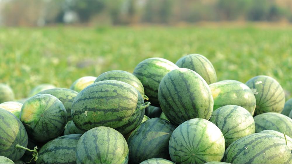 Beüthet a dinnyepara: hiánycikk lehet a magyarok kedvenc nyári gyümölcse?
