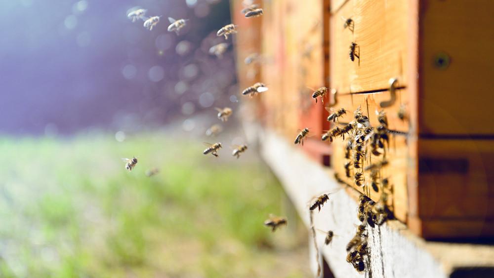 Nagyot drágul idén a magyar méz: ennyire kevés méztermés már rég volt