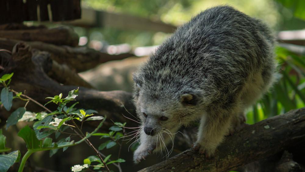 Újszülöttek a Szegedi Vadasparkban: ők az állatkert új sztárjai