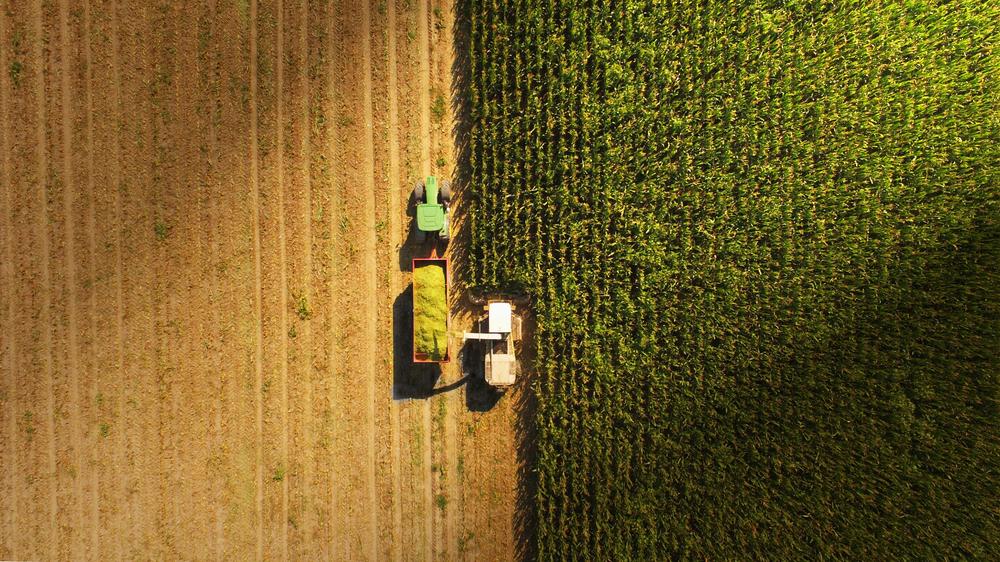 Veszélyben a mezei vadállomány: így okoznak károkat a gazdák