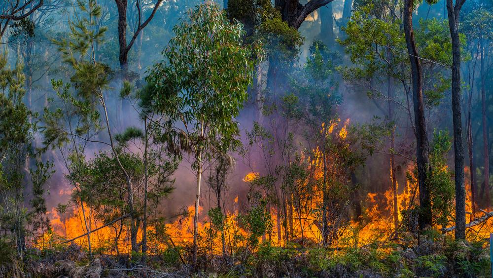 Védd ki a bírságot: tűzgyújtási tilalmat rendeltek el öt megyében