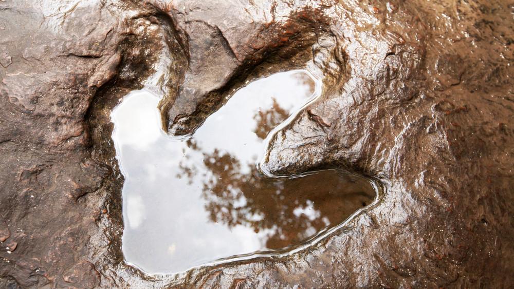 Páncélos, pikkelyes ragadozókat találtak a Bakonyban: rengeteg van belőlük