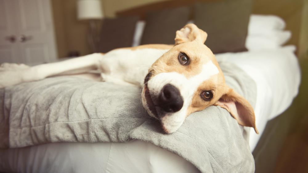 Kutya nélkül mennél nyaralni? Ennyibe kerül panzióba adni kedvencedet