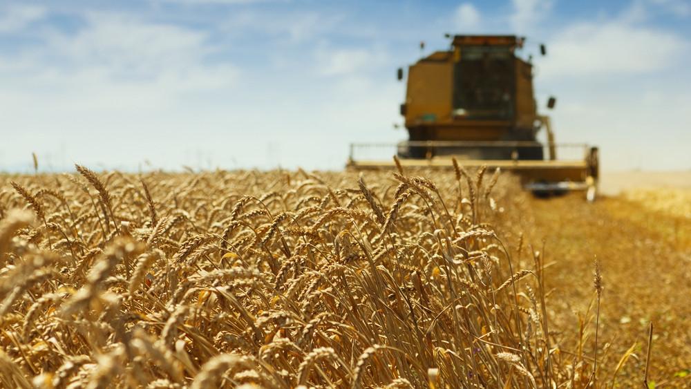 Exportra is jut a magyar gabonából: ötmillió tonna búza várható hazánkban