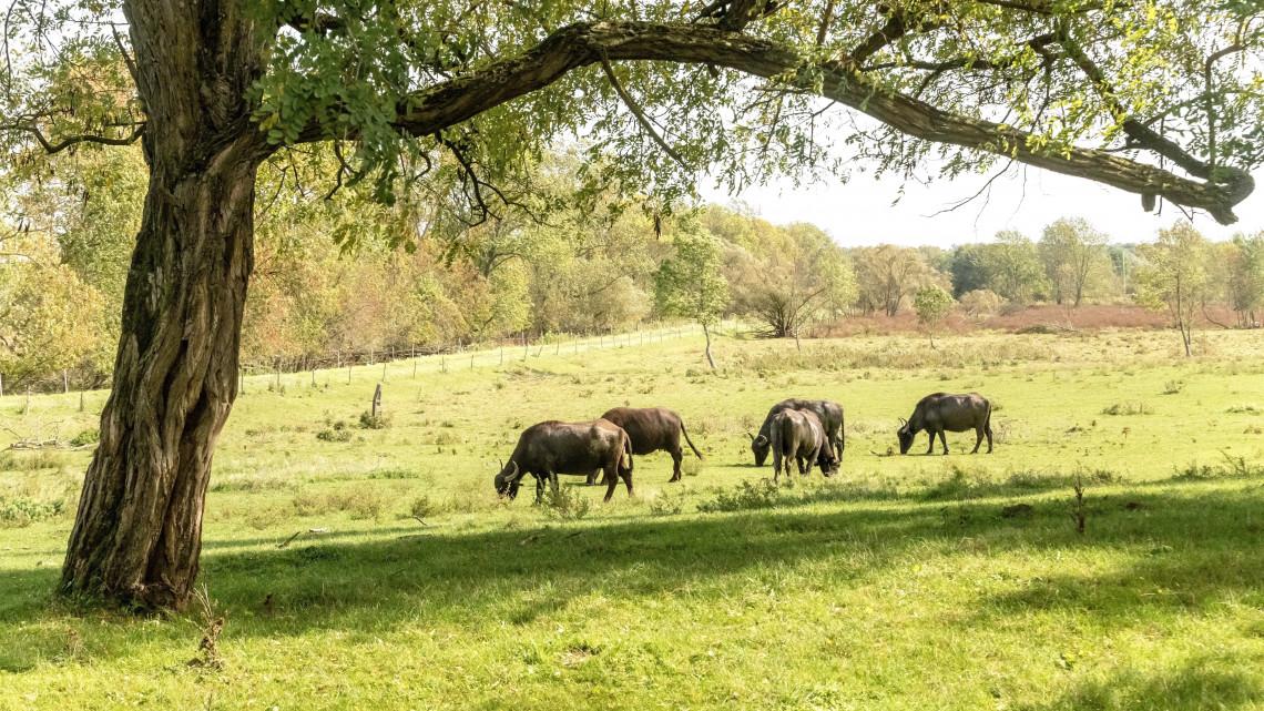 Megújulnak a nemzeti parkok: hatalmas támogatási összeg várható