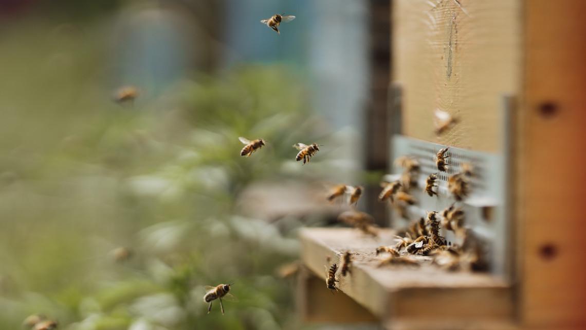 Kétségbeesett méhészek: évek óta nem volt ilyen rossz szezon
