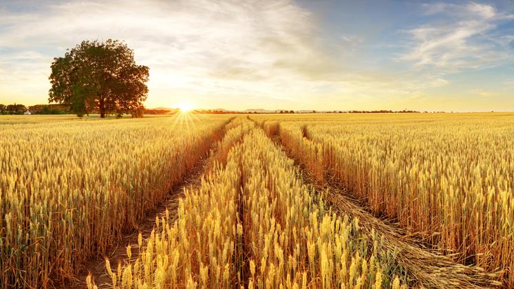 Jó évet zárhatnak a gazdák: kiemelkedő termésre számítanak ezekben a megyékben