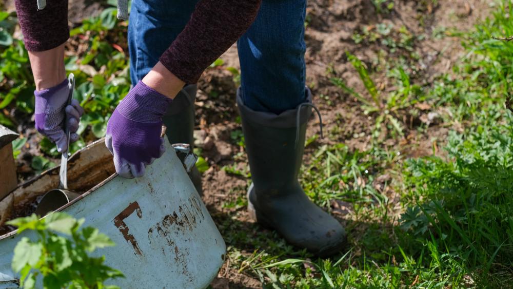 Lehull a lepel: ezzel a trükkel turbózzák a növényeket a kertészetek