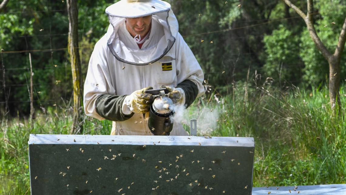 Eltűnhet a magyar méz? Egyre kevesebb a méhész hazánkban