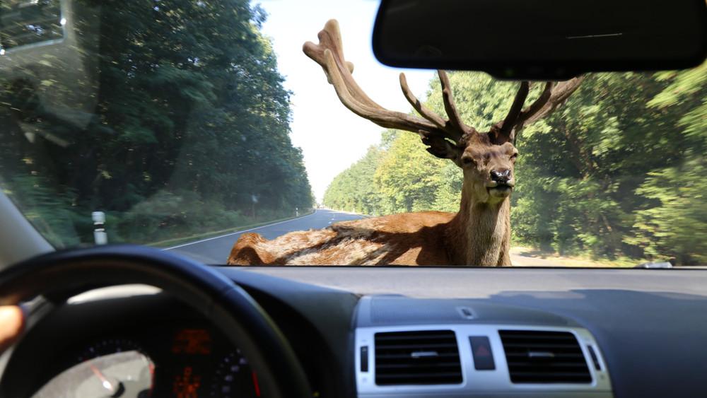 A legtöbb autós ezt nem tudja: 1 milliós bírság is járhat érte a magyar utakon