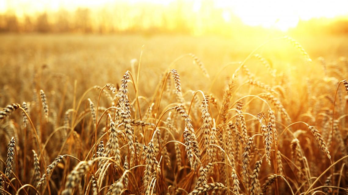 Sok kárt okozott a szeszélyes időjárás: ennyi termésre számítanak a gazdák