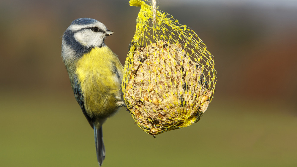 Csak télen, vagy nyáron is kell etetni a madarakat? Itt a válasz!