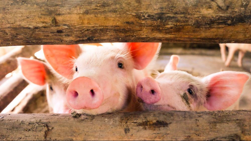 Elbúcsúzhatunk az olcsó hústól: még évekig tovább emelkedhet az ára
