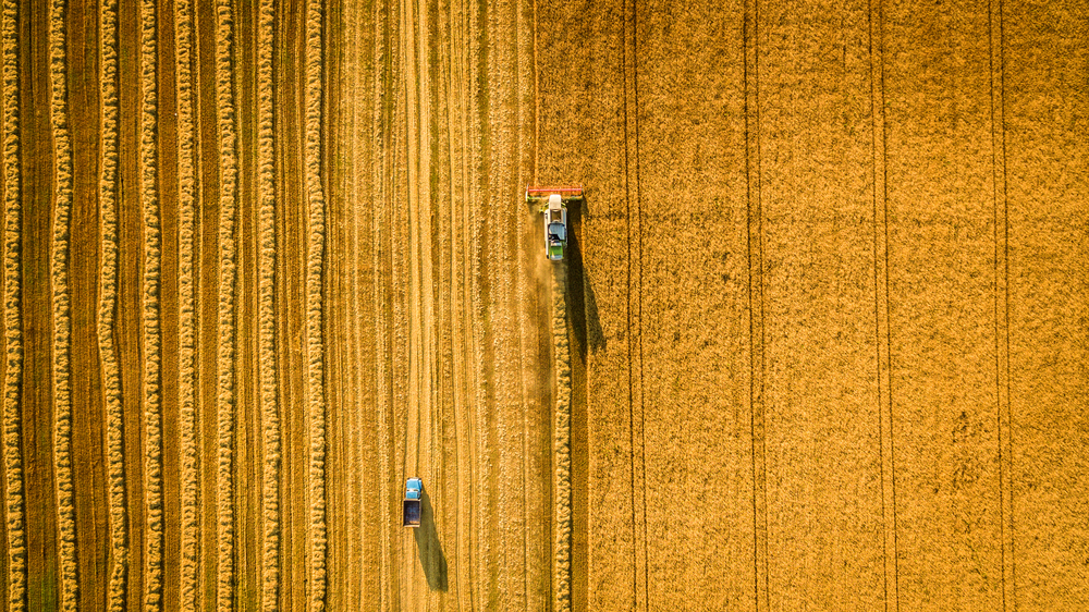 Javában tart a betakarítás: ilyen termésátlagra lehet számítani idén