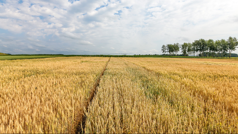 Kiszolgáltatott a magyar mezőgazdaság: az időjárás és külföld diktálja az árakat