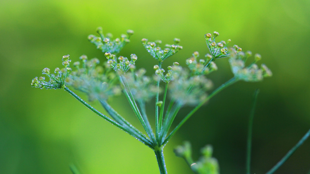 Kirándulók, figyelem: ezt a hétköznapi növényt ne fogd meg, durván mérgező!