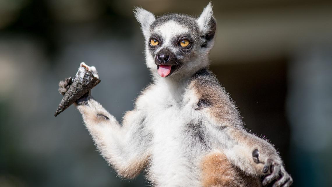 Napi cuki: így hűsölnek a Debreceni Állatkert lakói + képek