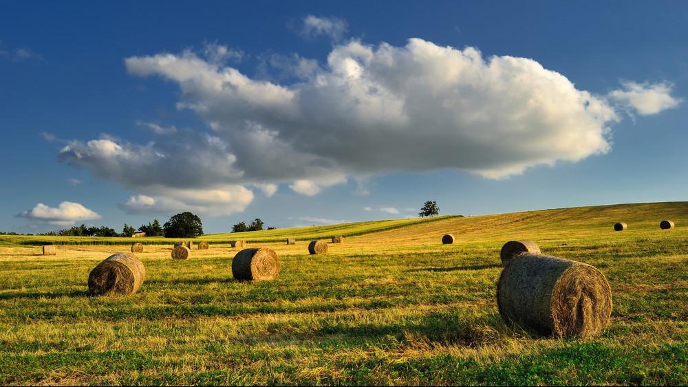 Ez vár a magyar mezőgazdaságra: ilyen irányba fejlesztenének a gazdák