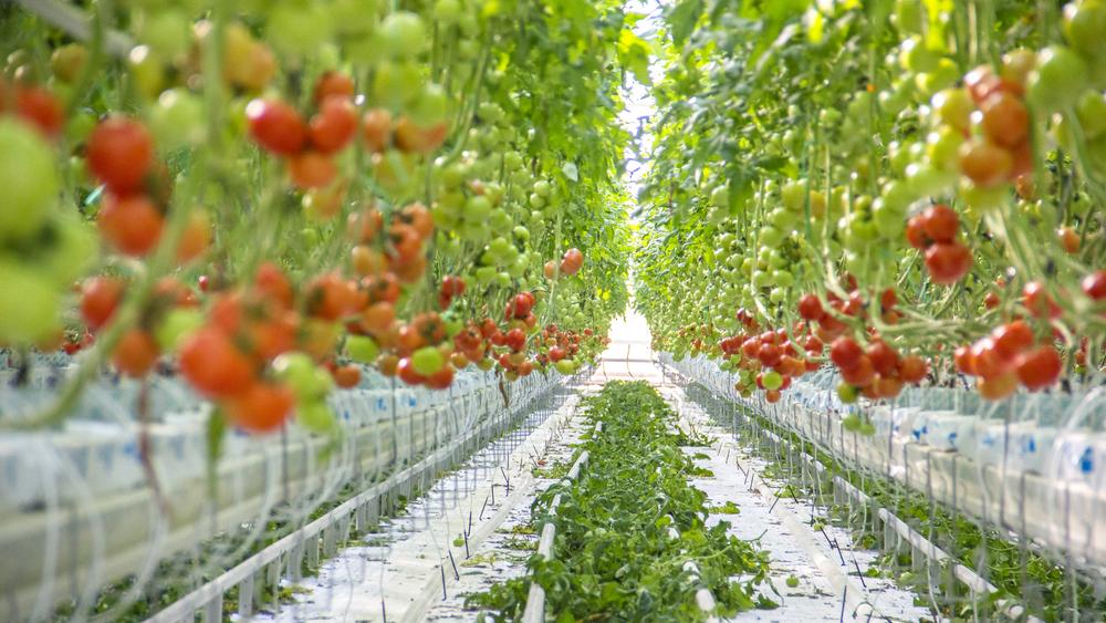Durva árrobbanás érik a boltokban: búcsút inthetünk a ma ismert zöldségeknek, gyümölcsöknek