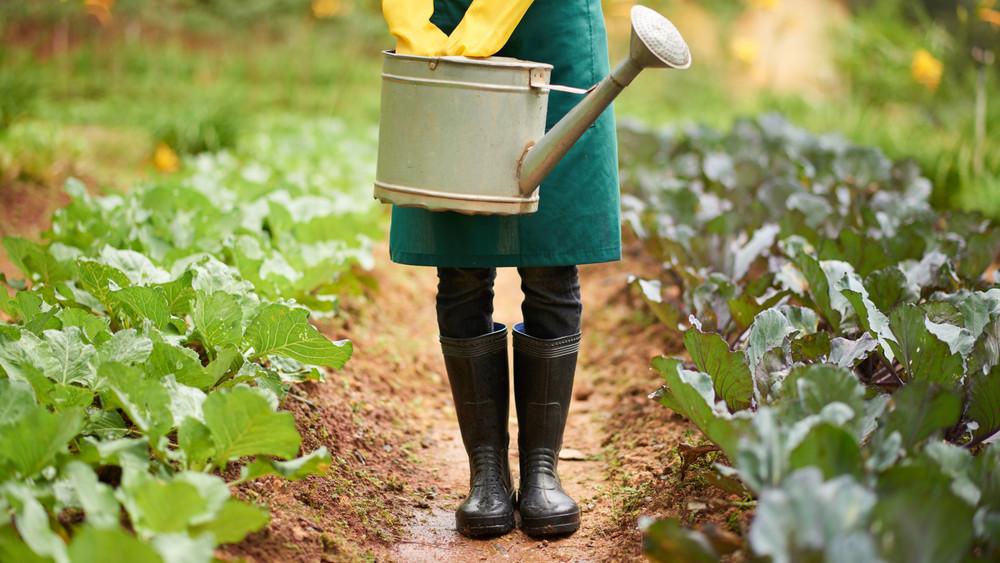 Kis kert, sok termés: így használd ki a legjobban a helyet a kertben!