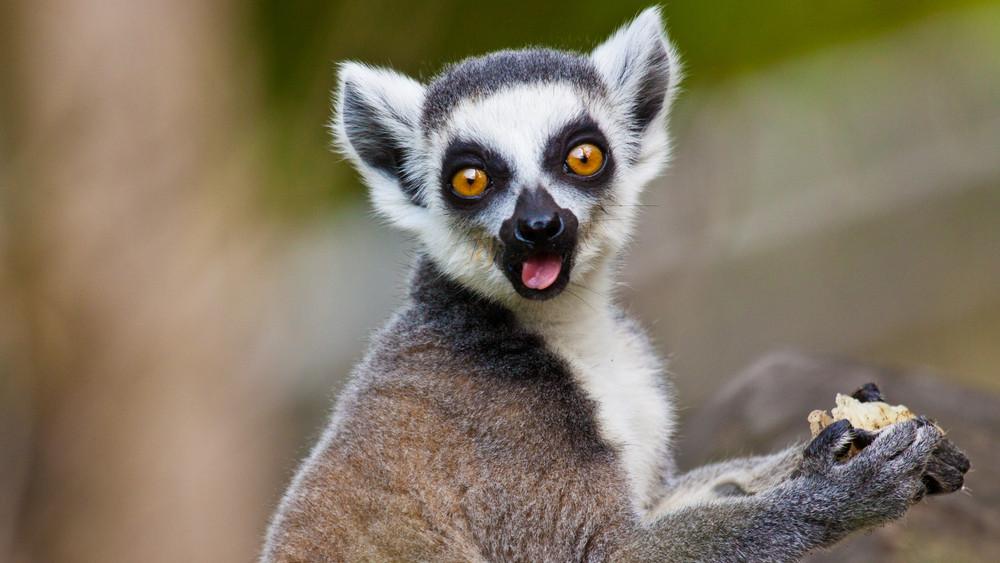 Ilyen lesz idén az Állatkertek éjszakája: itt a 13 állatkert részletes programja!