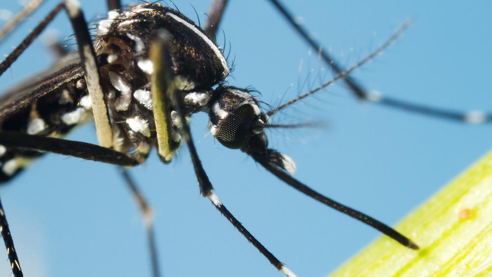 Itt vannak az első betolakodók: veszélyes szúnyoginvázió csaphat le Magyarországra