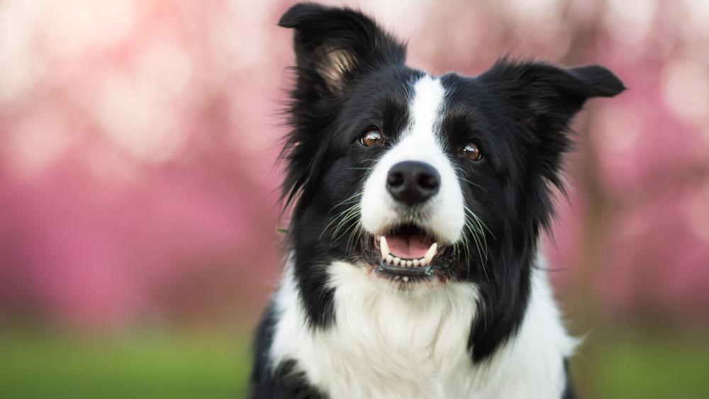 Eger kutyákkal gyógyít: speciálisan képzett ebek segítik a rehabilitációt