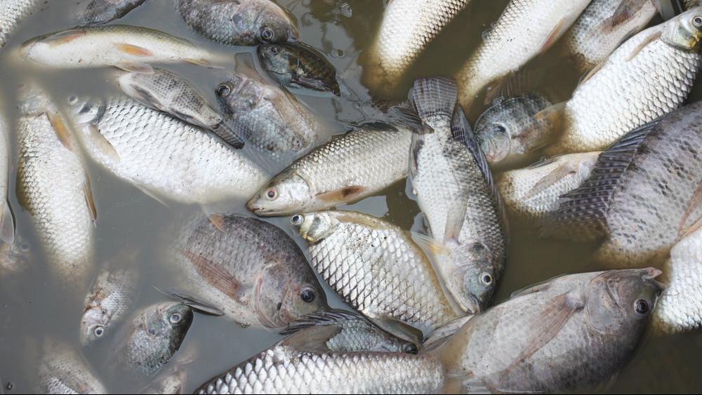 Ezrével pusztulnak a halak Hevesben: az állatok menekülnek, a vízzel van baj