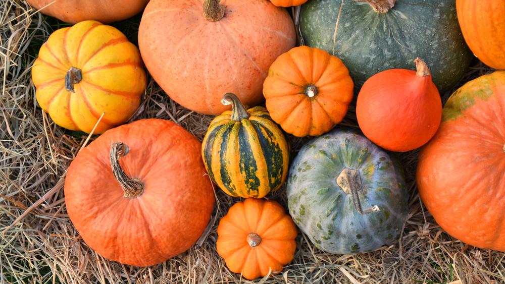 Így nevelj tököt: most vesd el, hogy ősszel már a sajátodat süthesd!
