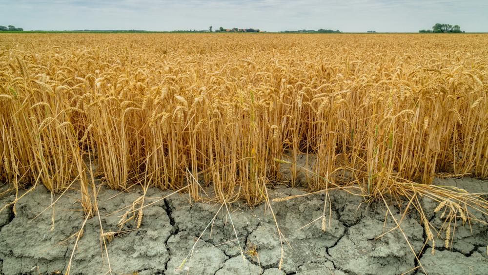 Küszöbön a katasztrófa: hazánkat is vízhiány és elsivatagosodás sújthatja