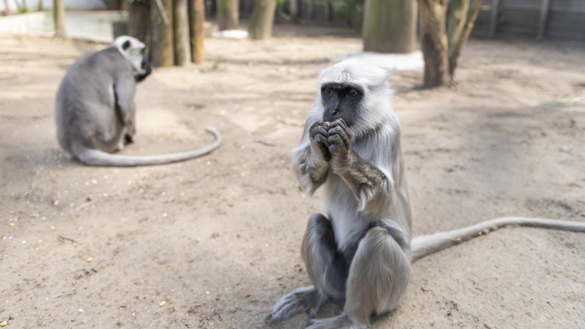 Irány Nyíregyháza: új lakóval gyarapodott az ország legjobb állatkertje!