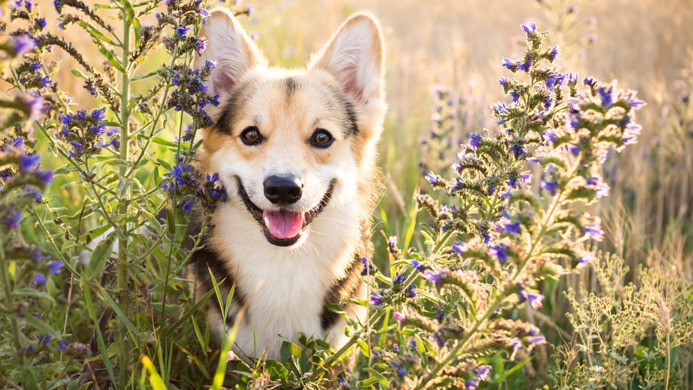 Ezek a tünetek, ha kutyád nem jut elég vitaminhoz: mutatjuk, mire figyelj!