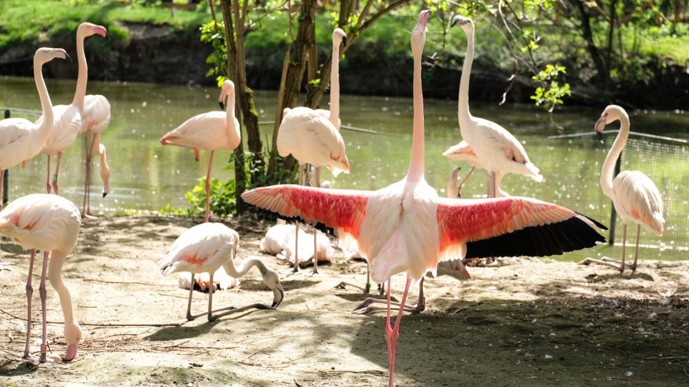 Halad a korral a Debreceni Állatkert: ezek az újítások várnak