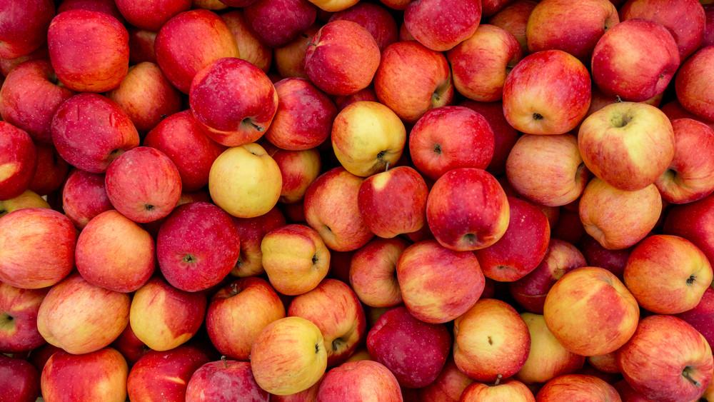 Örülhetnek a termelők: magasabb lesz idén az alma felvásárlási ára