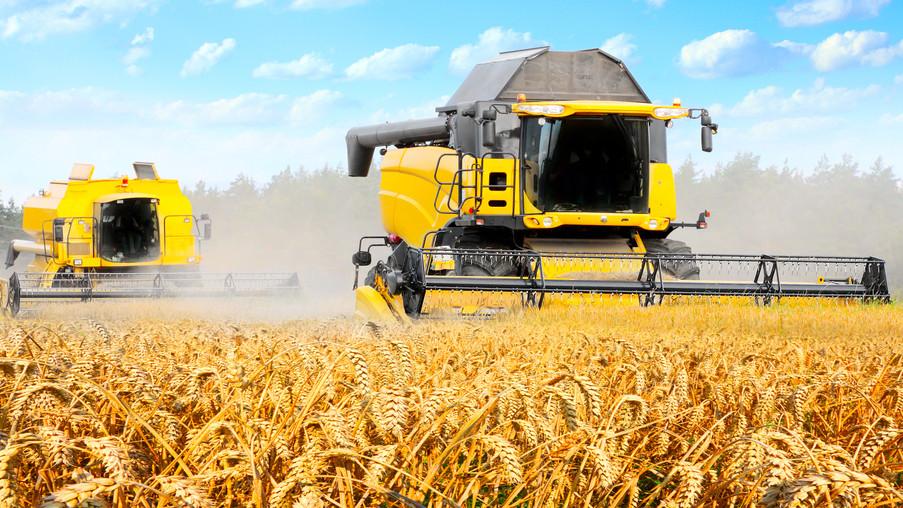 Kitettek magukért a gazdák: a szörnyű idő ellenére jó lett az idei termés