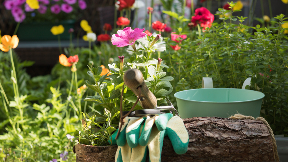 Ezek a legfontosabb nyár végi kerti munkák: itt az 5 pontos feladatlista