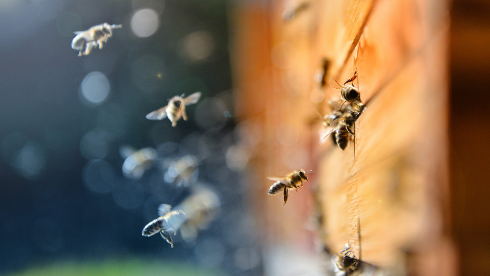 Nőhet a versenyképesség: egyre több támogatást kapnak a méhészek