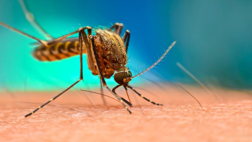 Szúnyoghelyzet: közel kilencven településen folytatódik az irtás