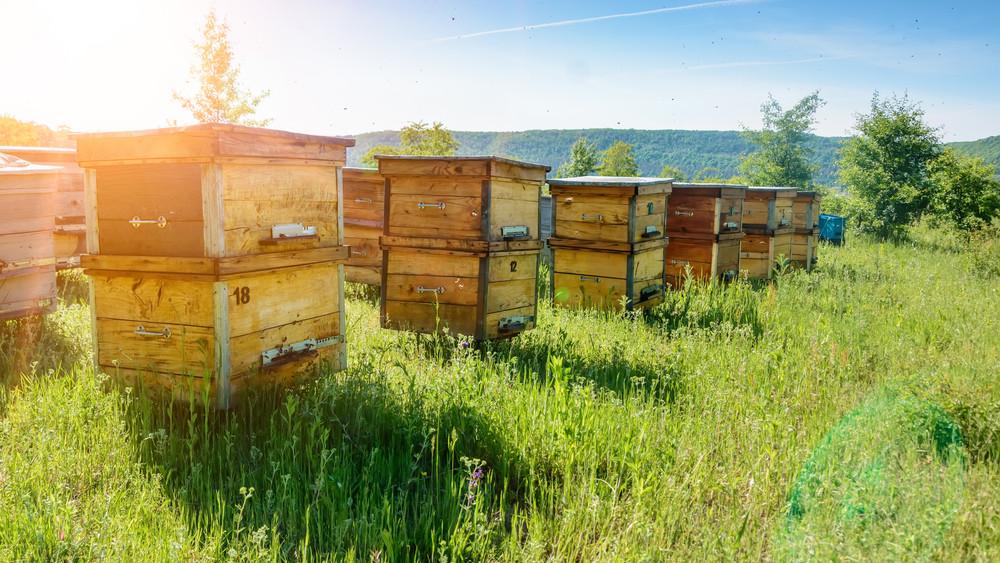 Méhészek, figyelem: még nyakon csíphető a támogatás