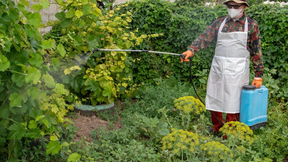 5 pusztító szuperrovar Magyarországon: a klímaváltozással jöttek, viszik a termést