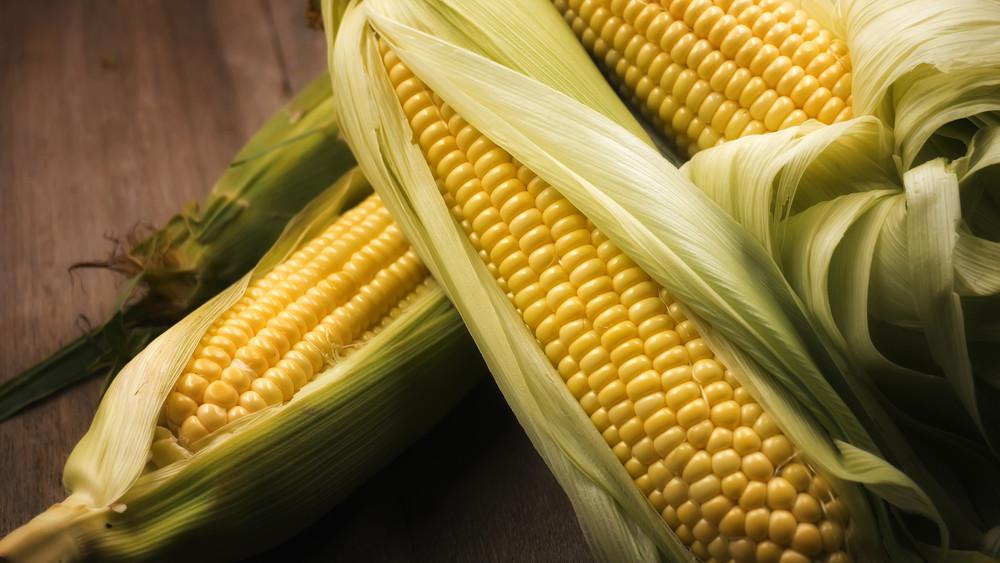 Örülhetnek a magyar gazdák: aranyáron mérik idén a kukoricát