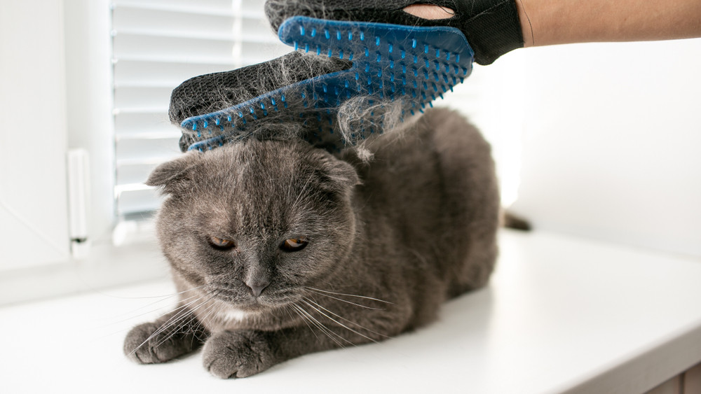 Allergiás vagy a macskaszőrre? Vége a szenvedésnek, itt a védőoltás